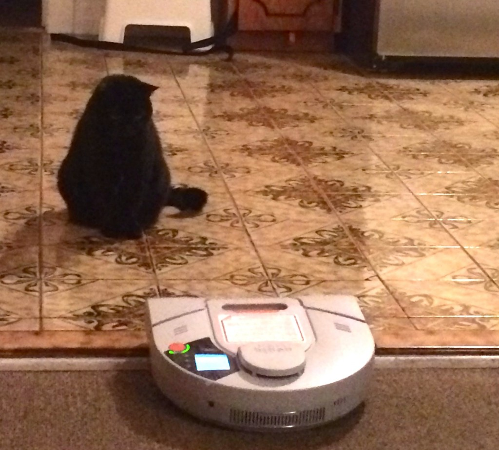 Cat vs. Vac